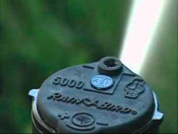 Ротор Рейн Берд 5004